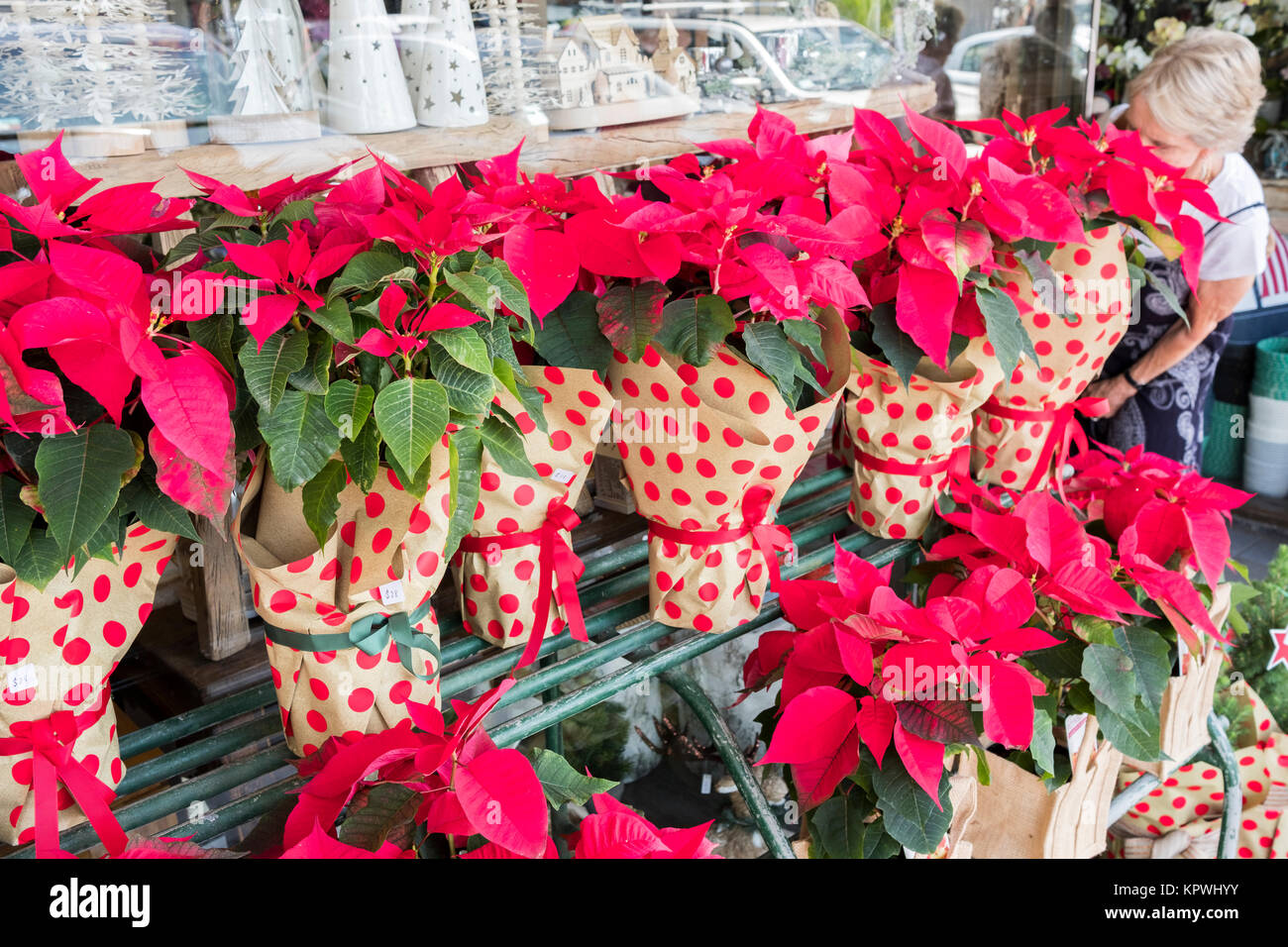 Buy Plants Sydney Red Christmas Poinsettia Plants In Pots For Sale At A