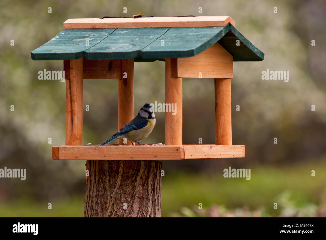 Kohlmeise Vogelhaus Blaumeise Stock Photos Blaumeise Stock Images Alamy