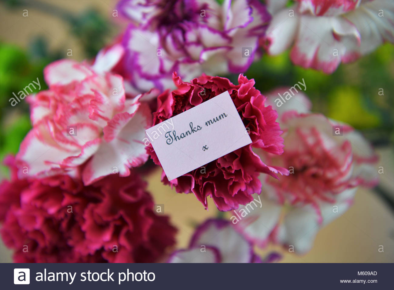 Carnation Flower Gift Thank You Note Flowers Stock Photos & Thank You Note