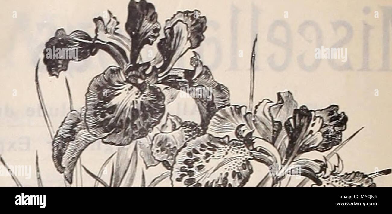 Freesia Seeds Stock Photos Freesia Seeds Stock Images