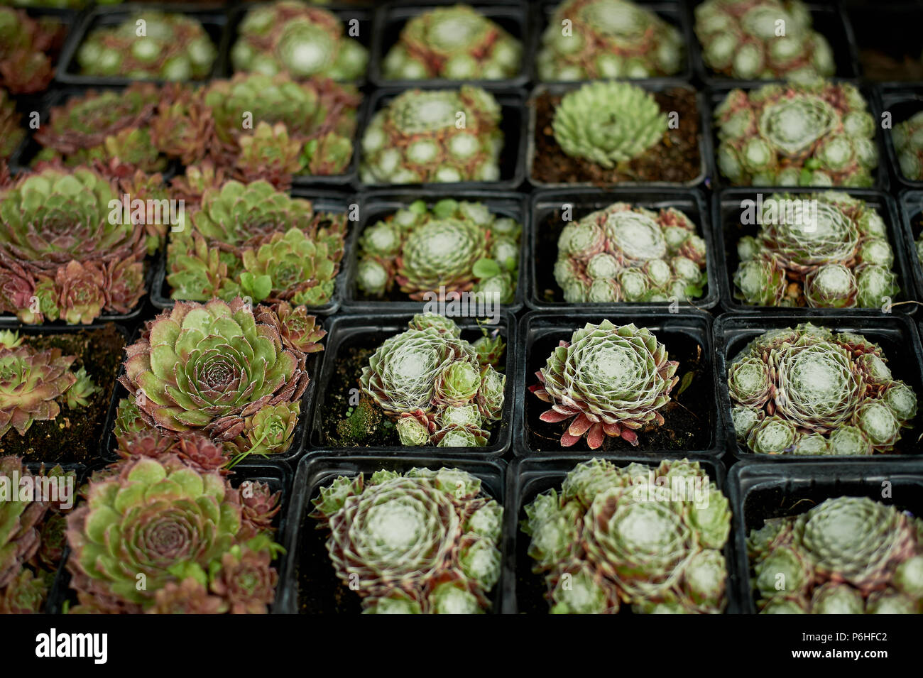 Cactus Pots For Sale Succulents For Sale Stock Photos And Succulents For Sale