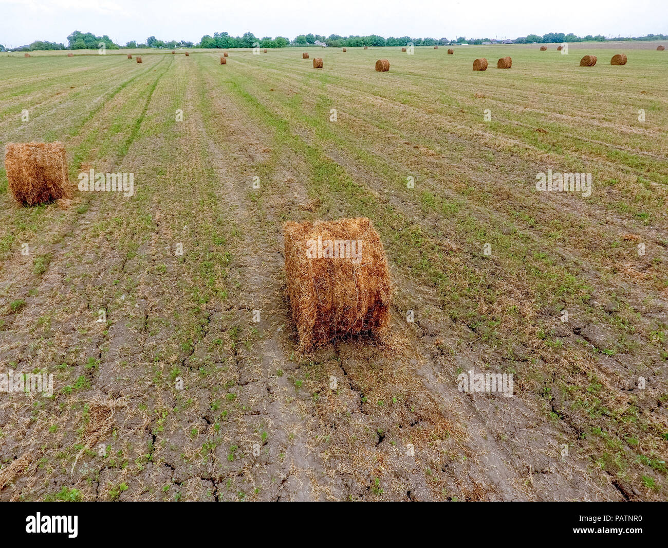 Feed Hay Bales Of Hay In The Field Harvesting Hay For Livestock Feed