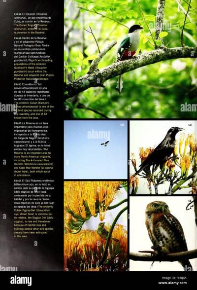 Protegido Stock Photos & Protegido Stock Images - Alamy