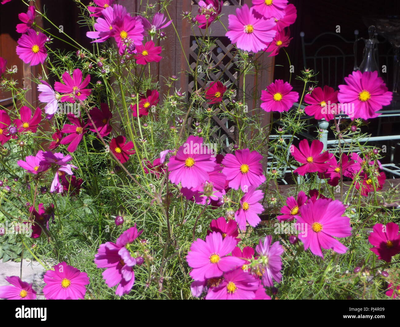 Decoration Parterre Rose Parterre Stock Photos Rose Parterre Stock Images Alamy