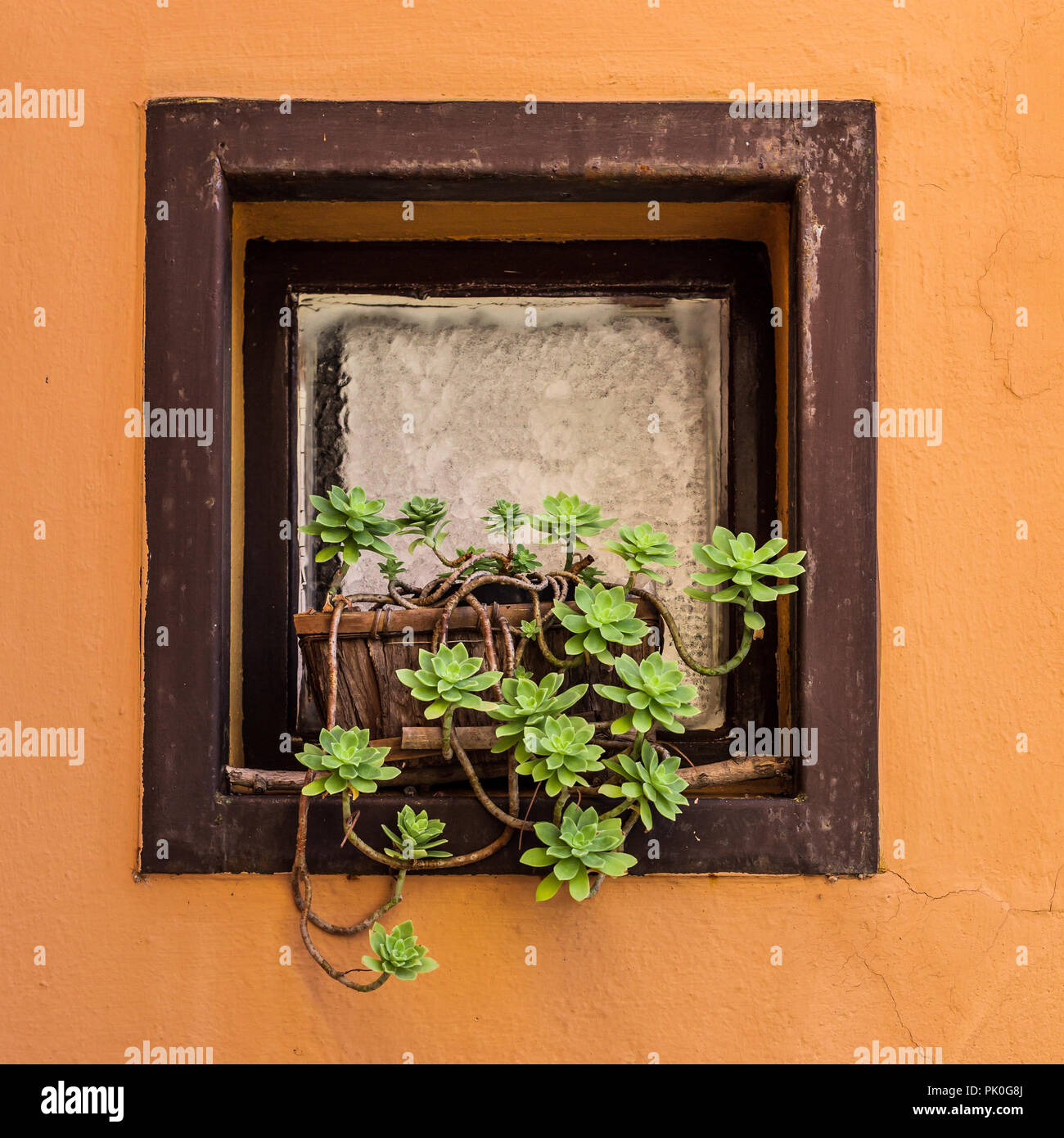 Wooden Windowsill Planter Succulent Plant In Plant Pots On A Windowsill Stock Photo