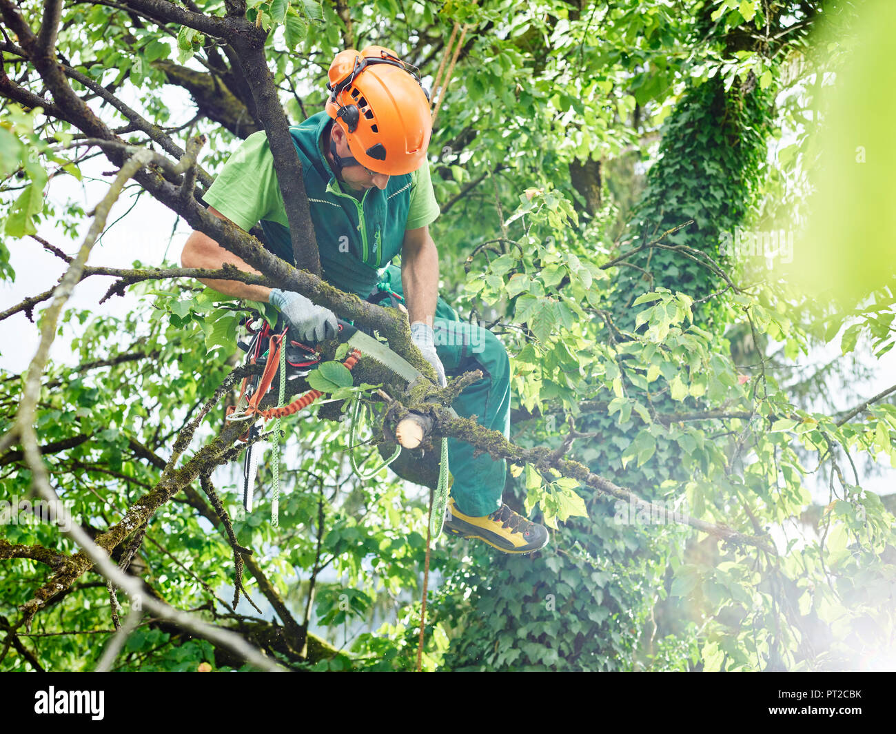 Tree Cutter Tree Cutter Pruning Of Tree Stock Photo 221329799 Alamy