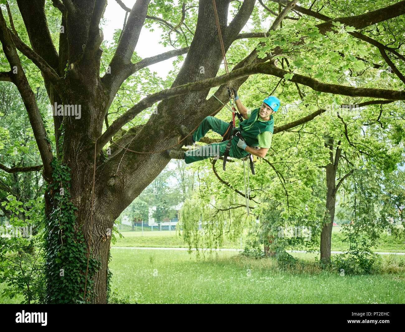 Tree Cutter Tree Cutter Hanging On Rope In Tree Stock Photo 221331528 Alamy