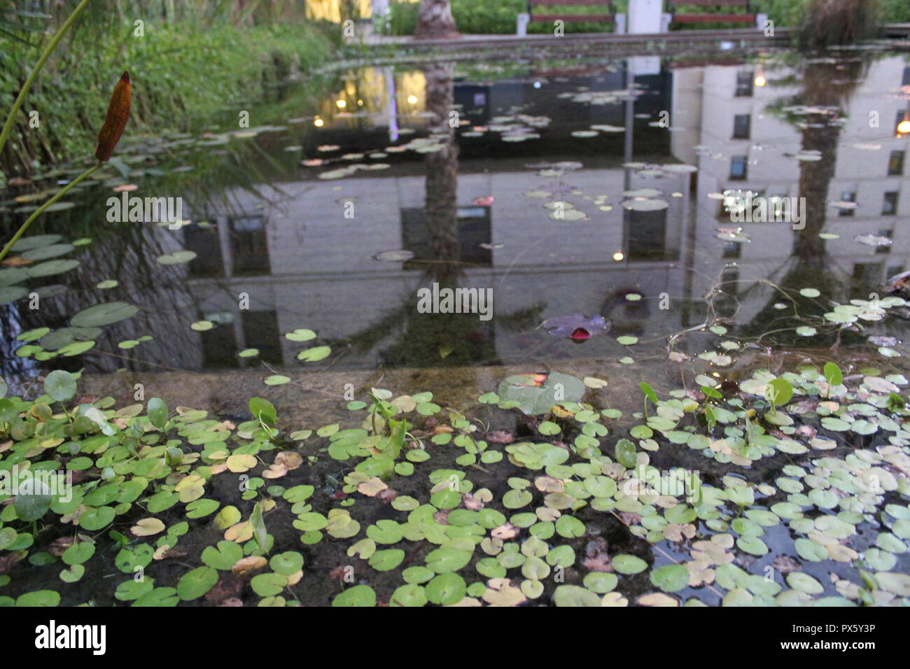 Pool Garden Leipzig Pool Vibes Stock Photos Pool Vibes Stock Images Alamy