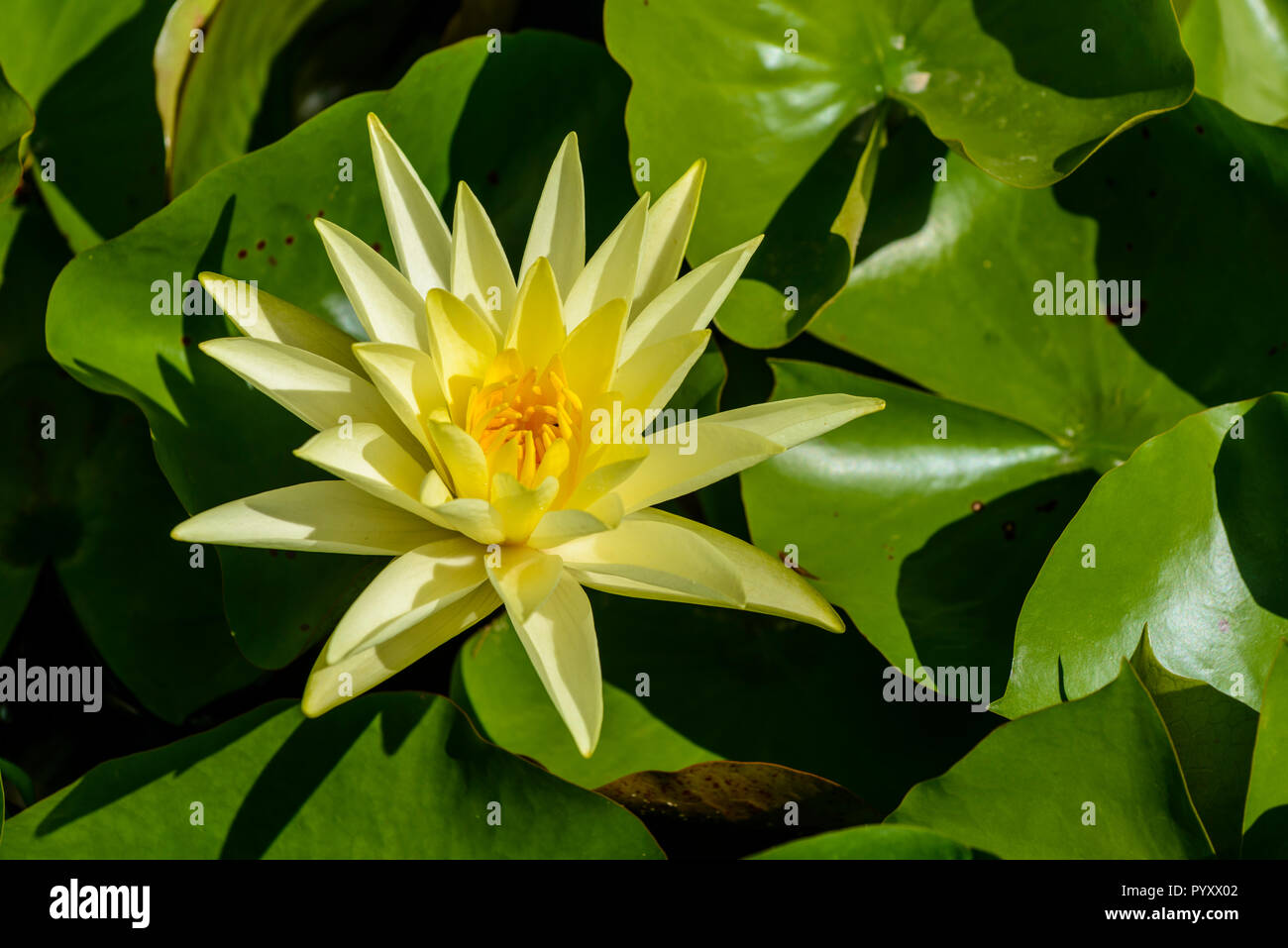 Lilie Leaves High Resolution Stock Photography And Images Alamy