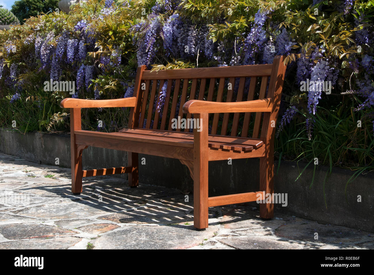 Garden Bench Australia Sydney Australia Wooden Garden Bench On Front Of A Wisteria Hedge