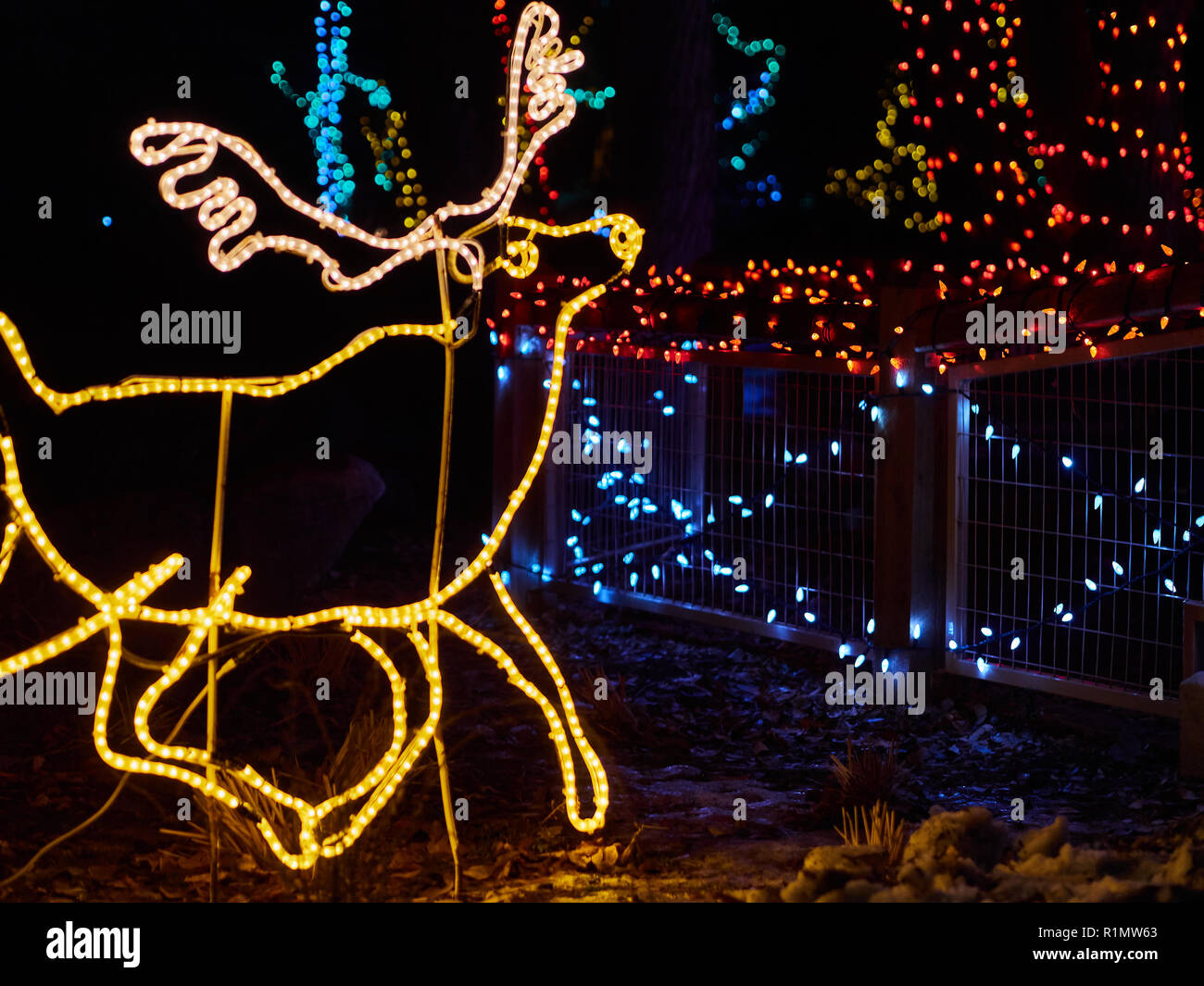 Christmas Led Lights Canada Calgary Canada December 12 2014 Elk Of Led Lights Calgary Zoo