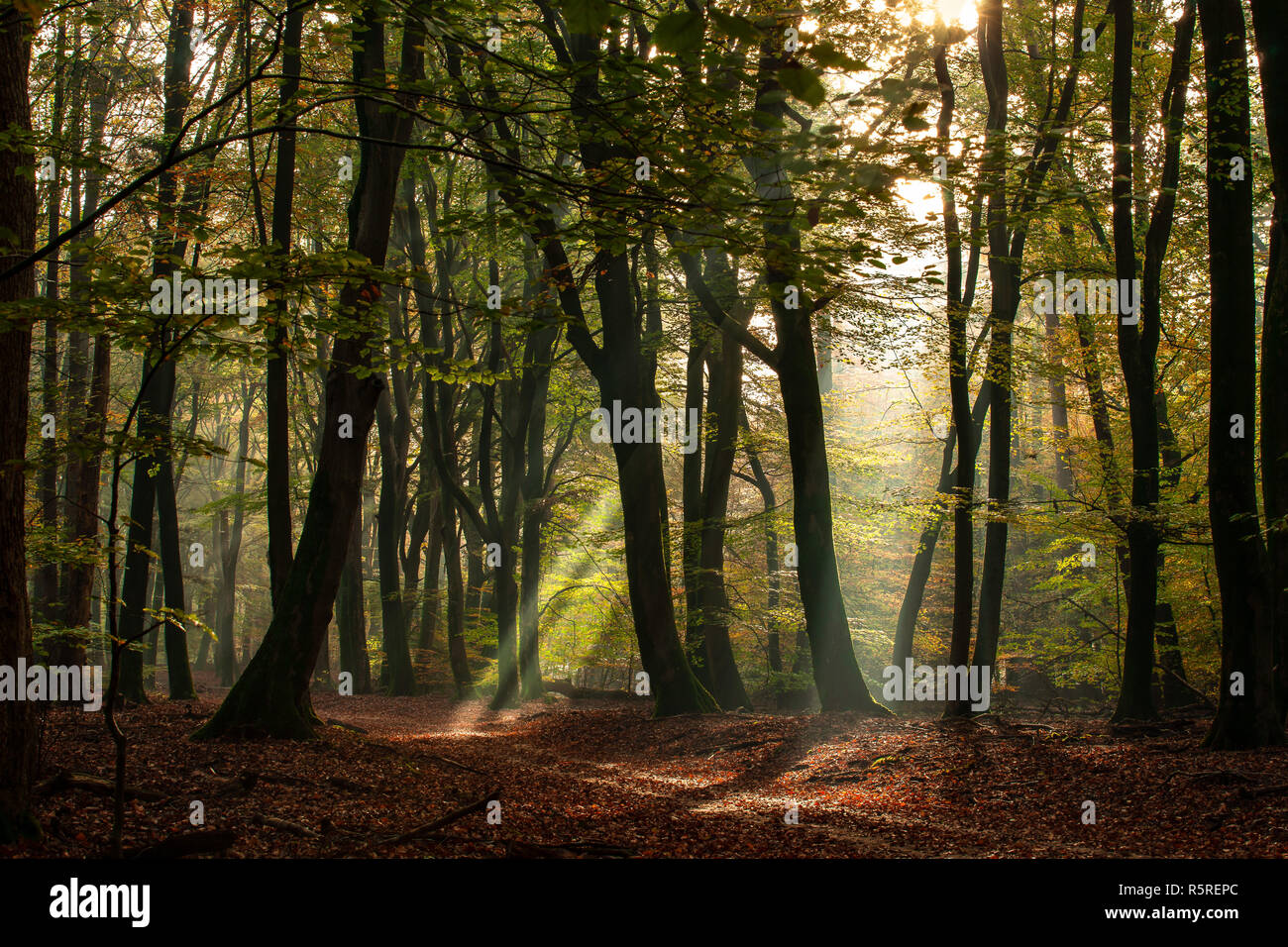 Beautiful One Speulderbos The