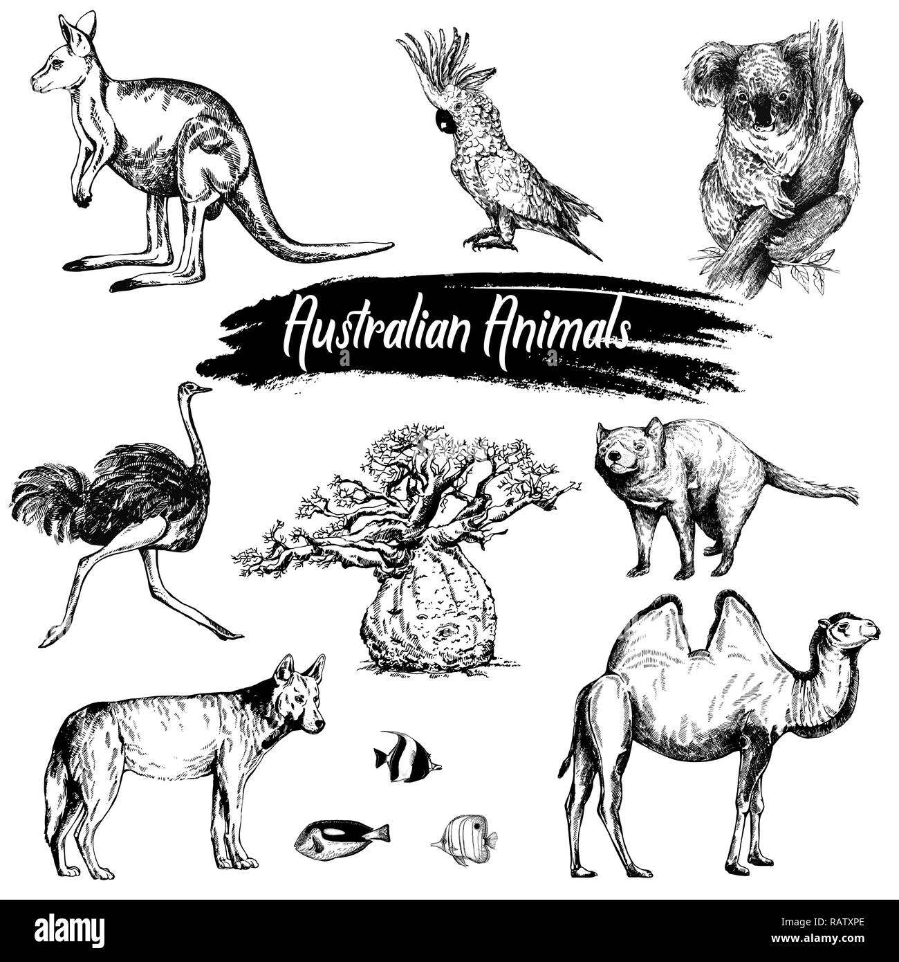 Australian Animals Drawings Set Of Hand Drawn Sketch Style Australian Animals Isolated On