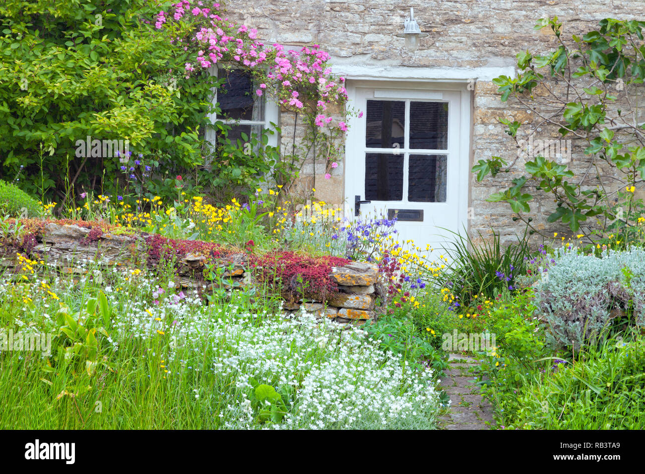 White Wooden Doors In A Charming English Country Cottage With Front Garden Full Of Flowers In Bloom Pink Rose Fig Tree Climbing The Stone Wall Stock Photo Alamy