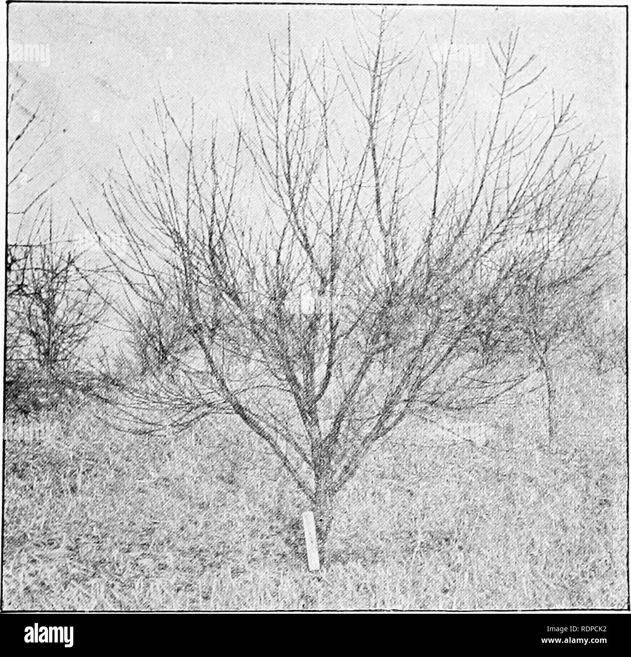 Black Bark Mulch Bark Mulch Black And White Stock Photos Images Alamy