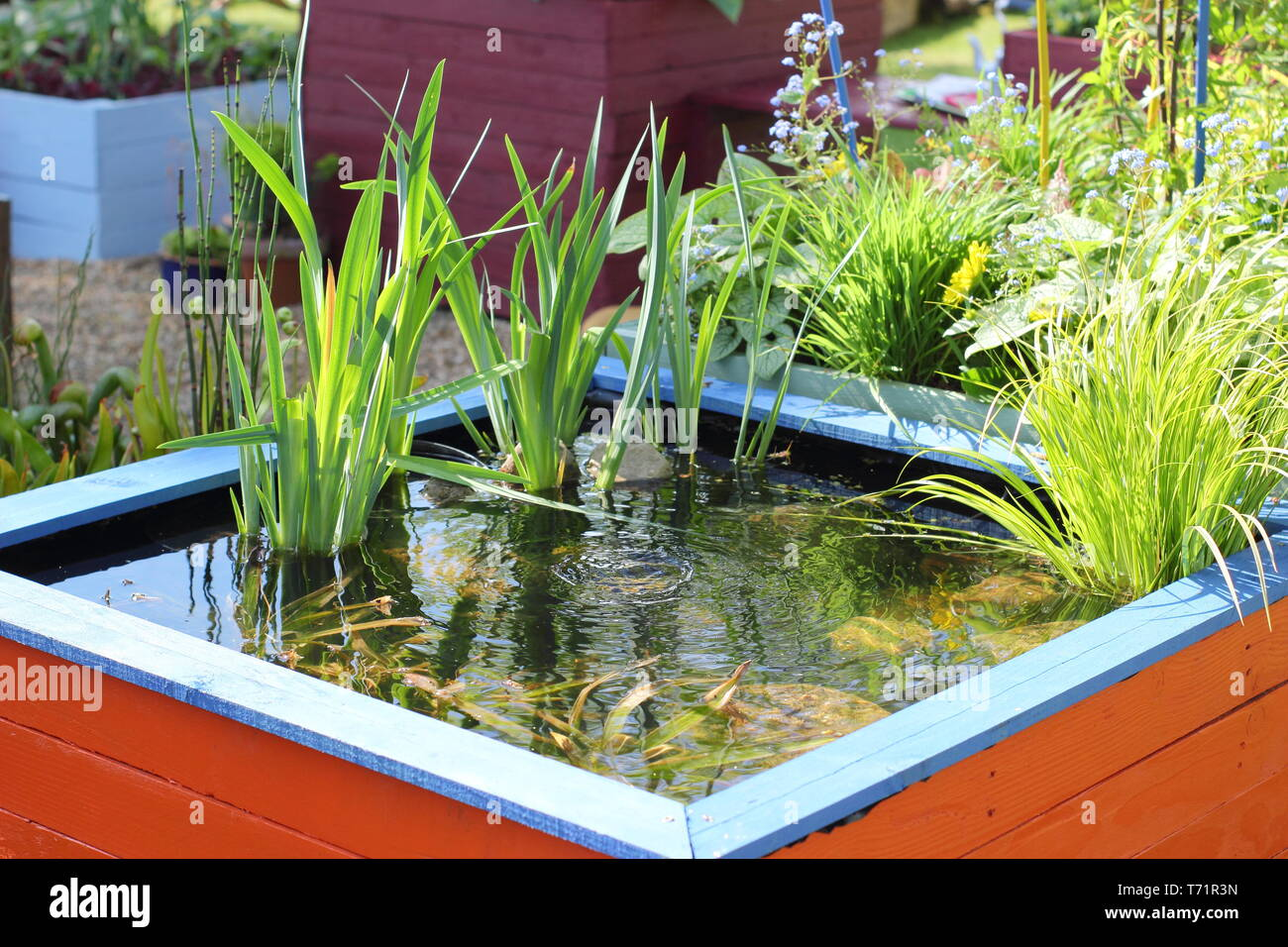 Swimming Pool Aus Paletten Raised Pond Garden Stock Photos Raised Pond Garden Stock Images