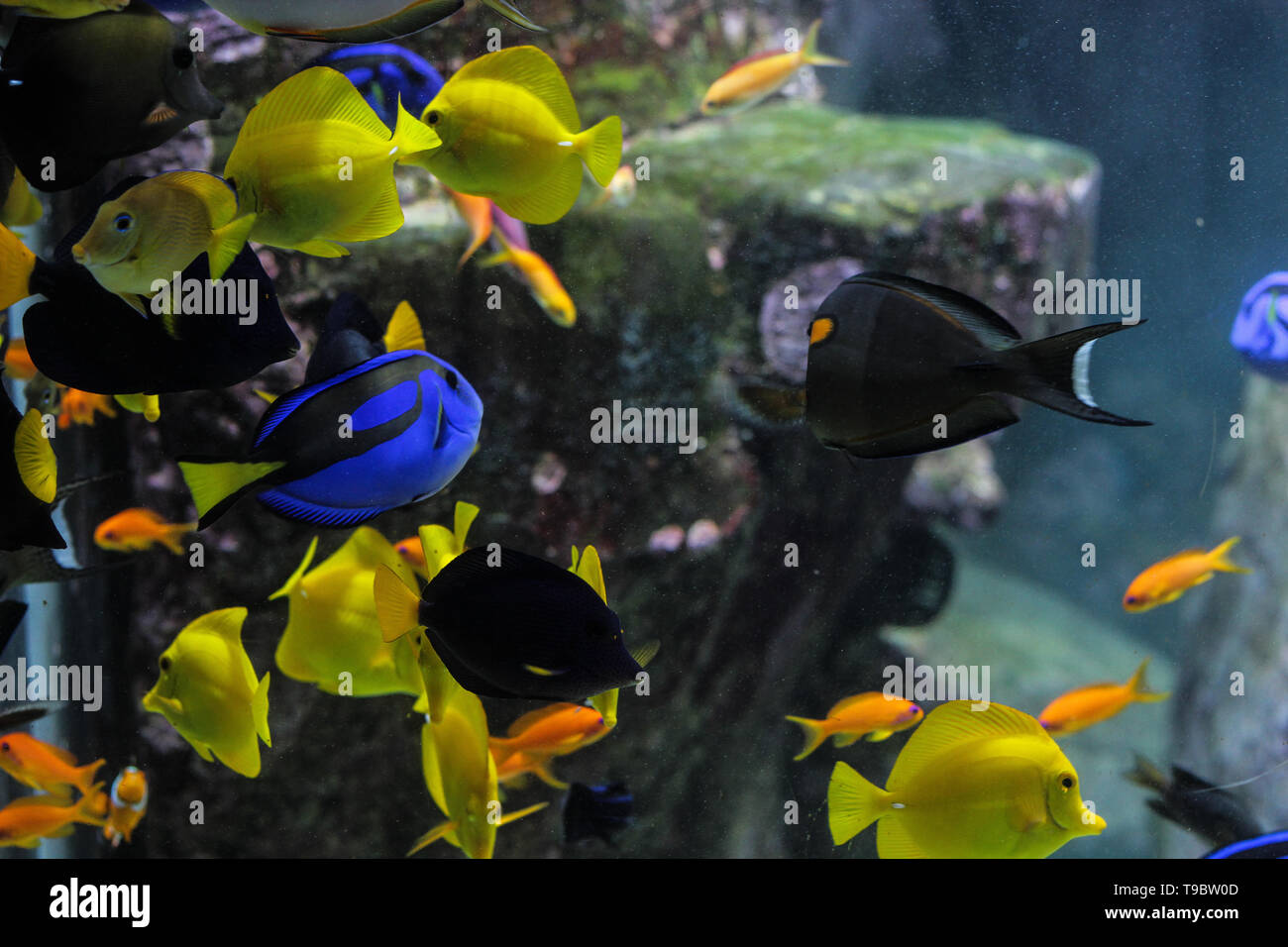 Dory Vis Dory Fish Stock Photos Dory Fish Stock Images Page 2 Alamy