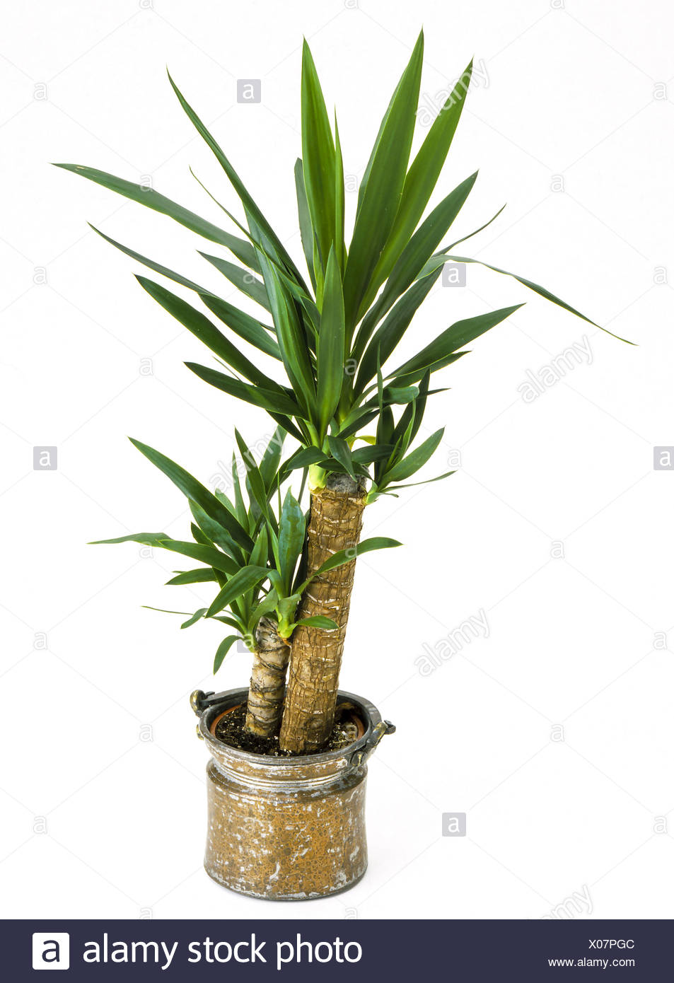 Topfpflanze Palme Zimmerpflanzen Cut Out Stock Images Pictures Alamy