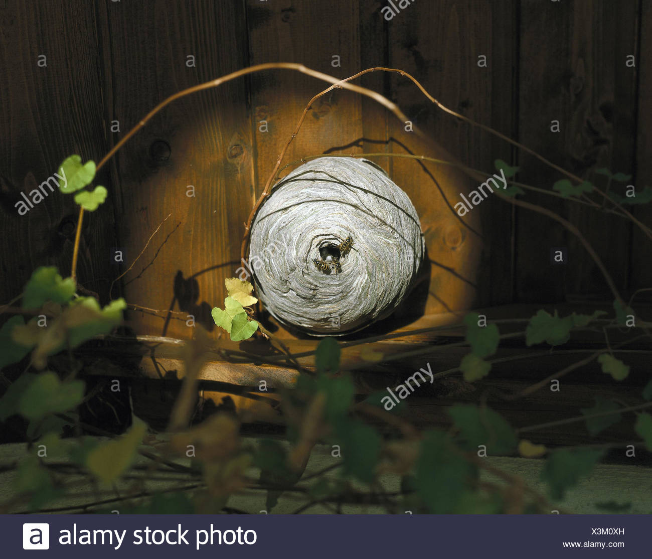 Holzvertäfelung Bilder Holzvertäfelung Stock Photos Holzvertäfelung Stock Images Alamy