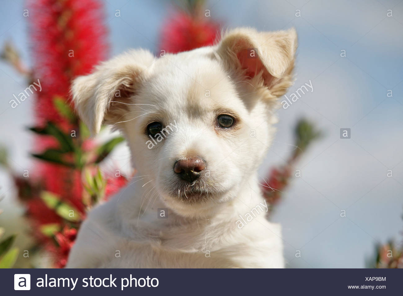 Crossbreed Puppies Stock Photos Crossbreed Puppies Stock
