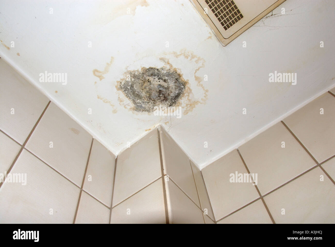 Schimmel Im Badezimmer Decke Mold Stockfotos And Mold Bilder Alamy