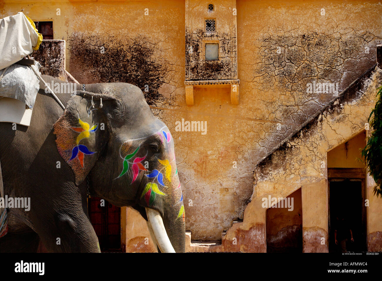 Elephant Deur Elephant House India Stockfotos Elephant House India Bilder Alamy