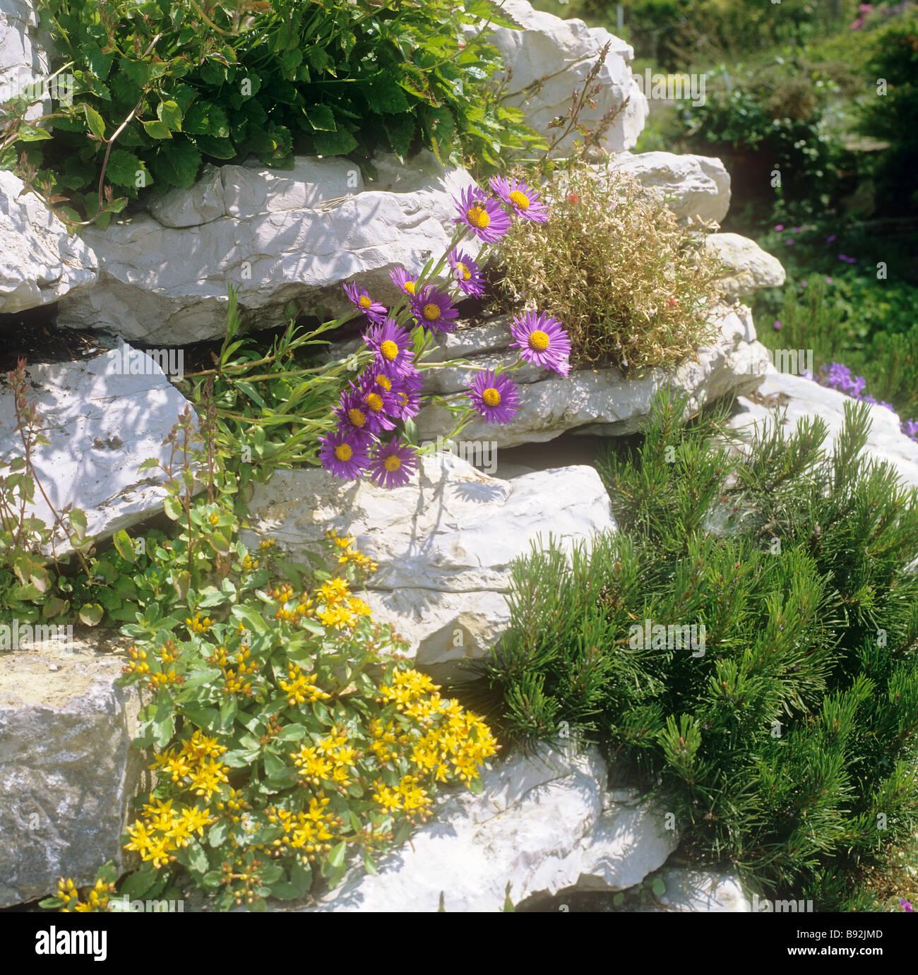 Blumen Steingarten | Pin Von Marlene Auf Natur Marlene Beautiful ...