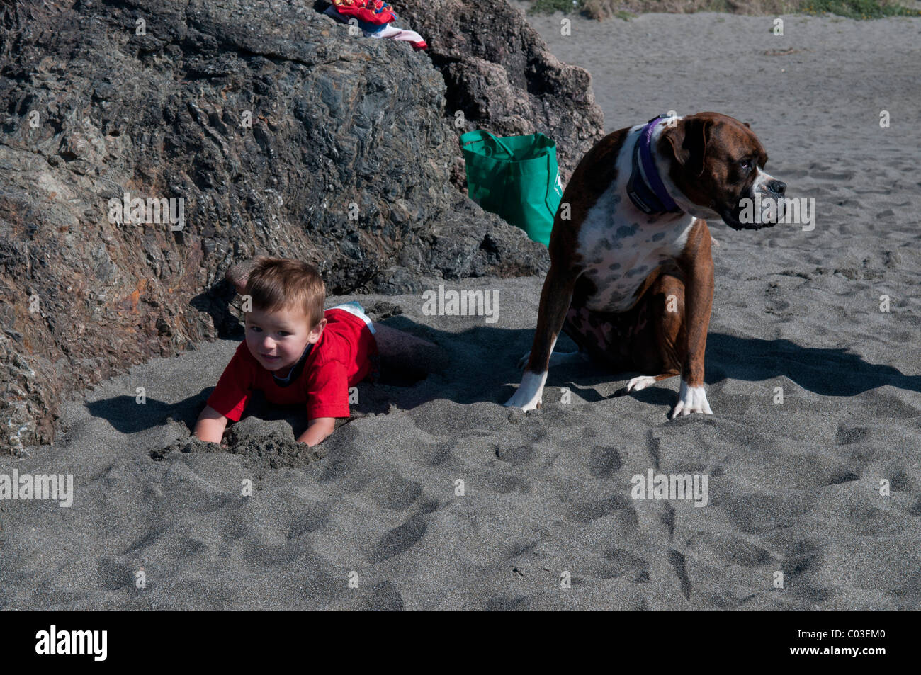 Baby Hunde Spiele Baby Playing Sand Stockfotos And Baby Playing Sand Bilder