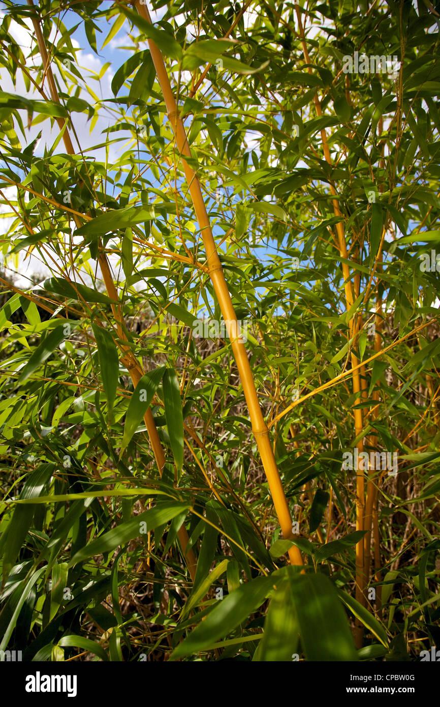 Gartengestaltung Mit Gräsern Und Bambus | Gräser Kübel Terrasse