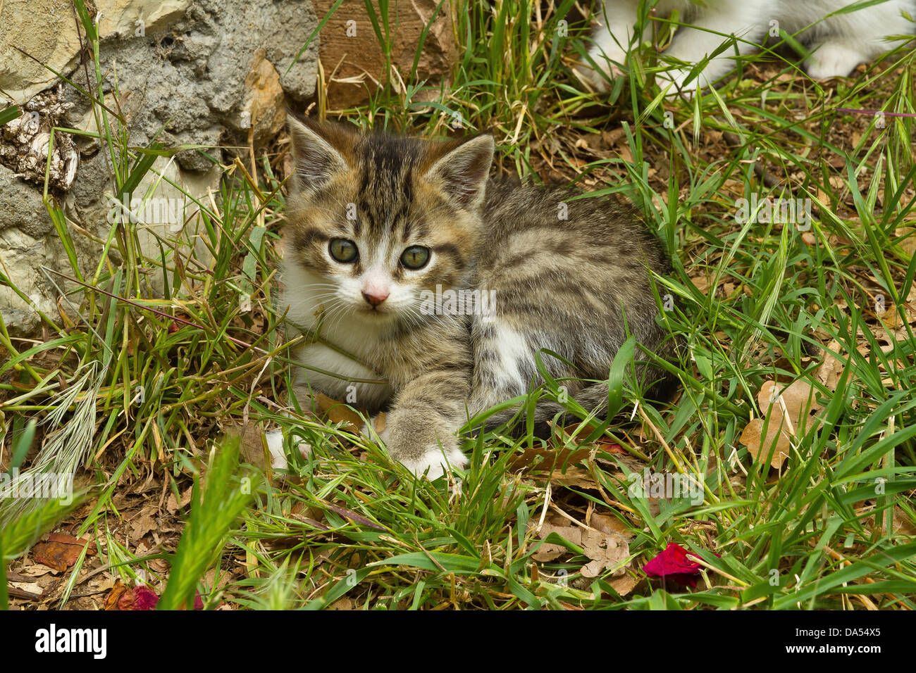Katze Macht In Garten Domestic Stockfotos And Domestic Bilder Alamy