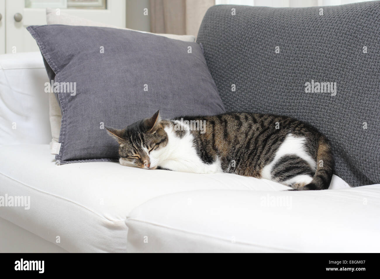 Katze Pinkelt Auf Sofa Reinigen Dozing Stockfotos And Dozing Bilder Alamy