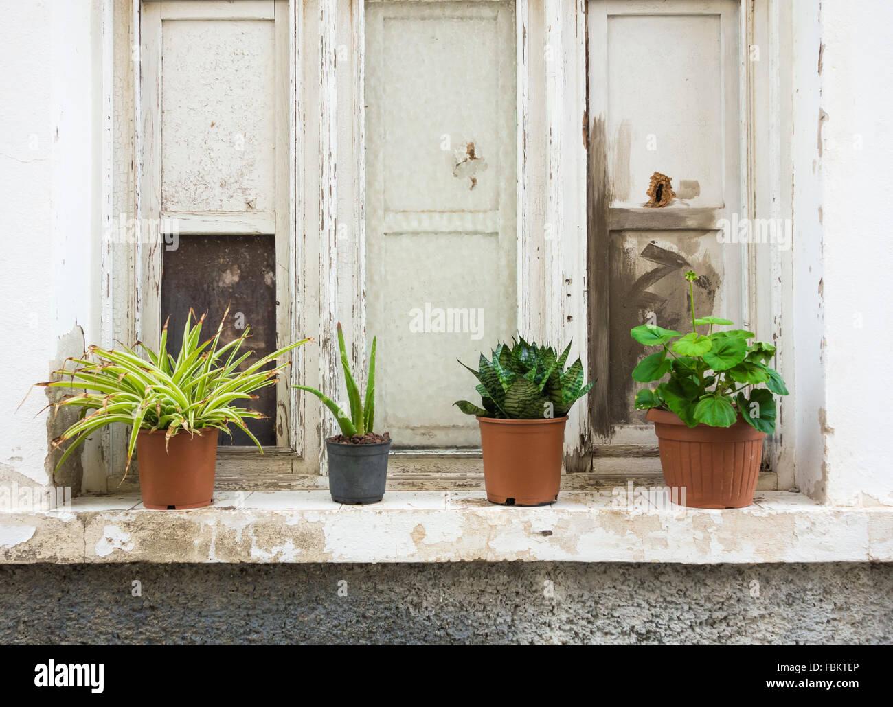 Fensterbank Innen Pflanzen Dekoration Fensterbank Pflanzen 5 Josie
