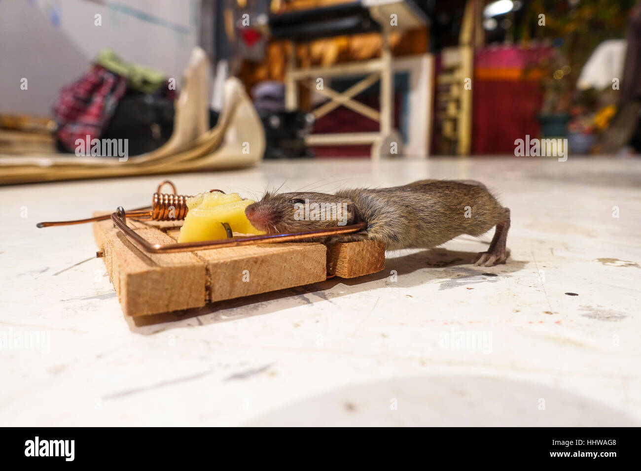 Mausefalle Köder Mice Cheese Stockfotos & Mice Cheese Bilder - Alamy