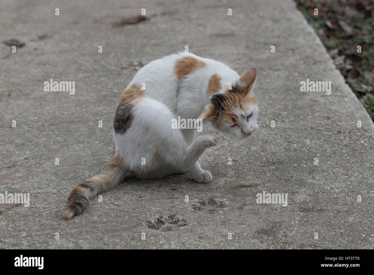 Katze Kratzt An Sessel Ear Scratching Stockfotos And Ear Scratching Bilder Alamy