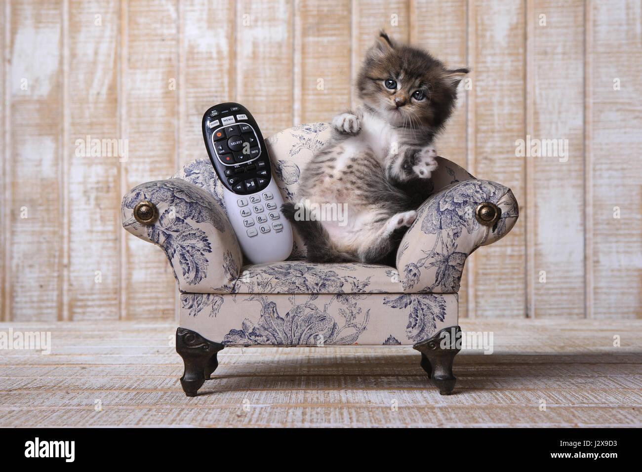 Couch Lustige Bilder Lustige Spruche Fur Die Kuche