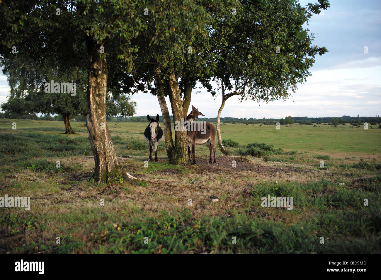 Kratzen Im Hals Donkey Tree Stockfotos And Donkey Tree Bilder Alamy