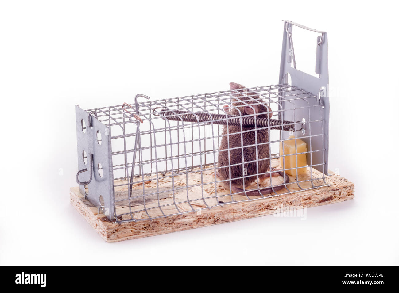 Maus In Der Küche Wie Fangen 39live Trap 39 Stockfotos And 39live Trap 39 Bilder Alamy