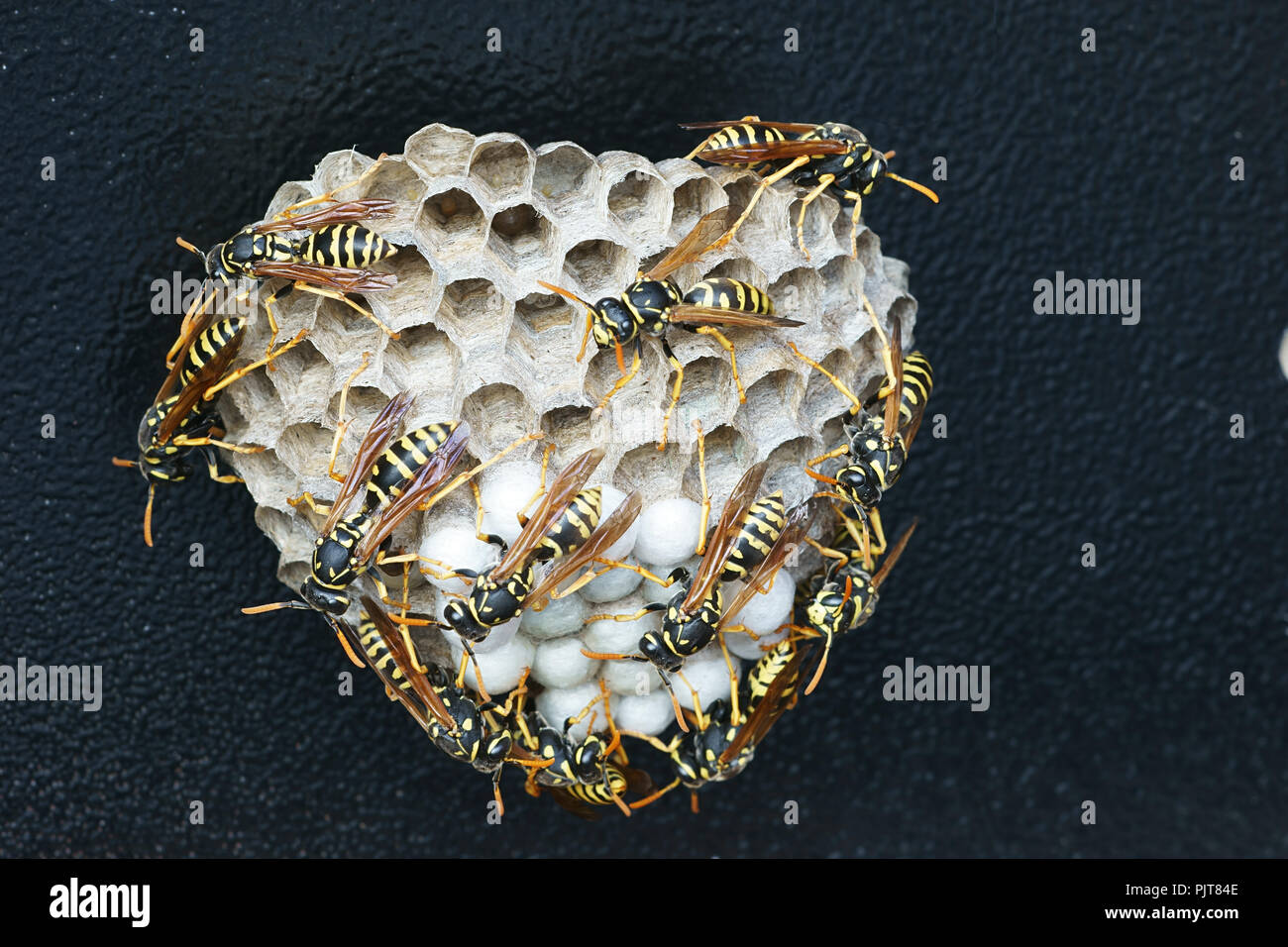 Wespennest Synonym Insect Nest Box Stockfotos Insect Nest Box Bilder Alamy