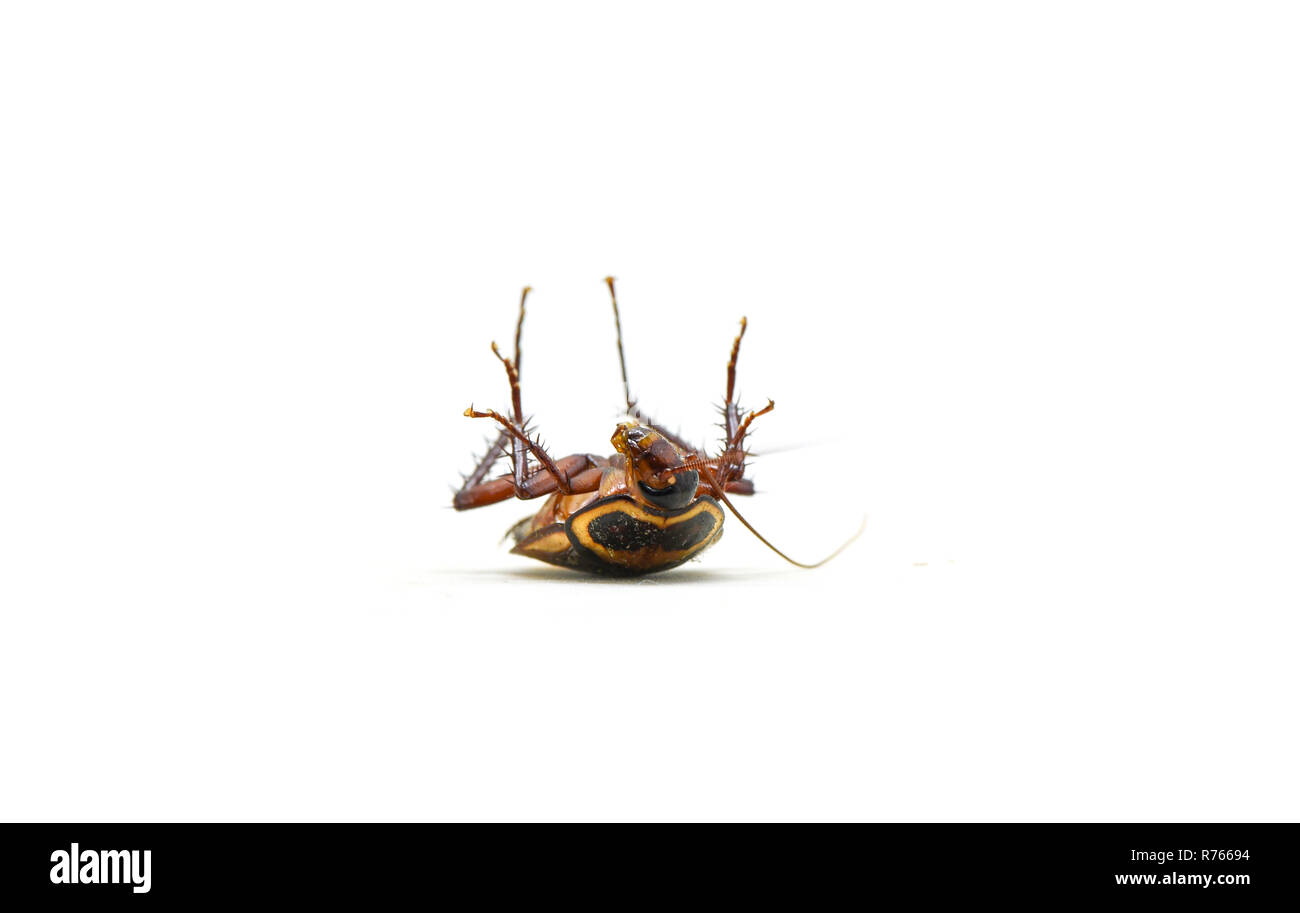 Junge Küchenschabe Cockroach Spray Stockfotos Cockroach Spray Bilder Alamy
