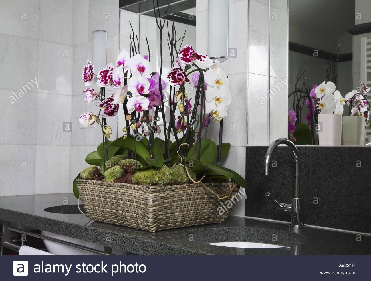 Blühende Pflanzen Fürs Bad