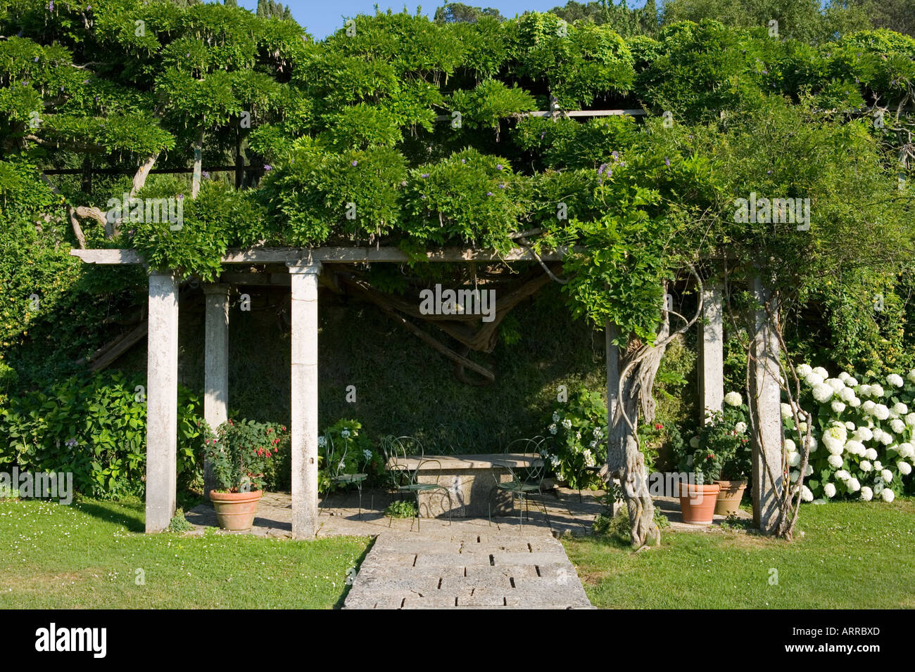 Pergola Glycine Glycine Pergola Cheap Glycines Et Pergolas With Glycine