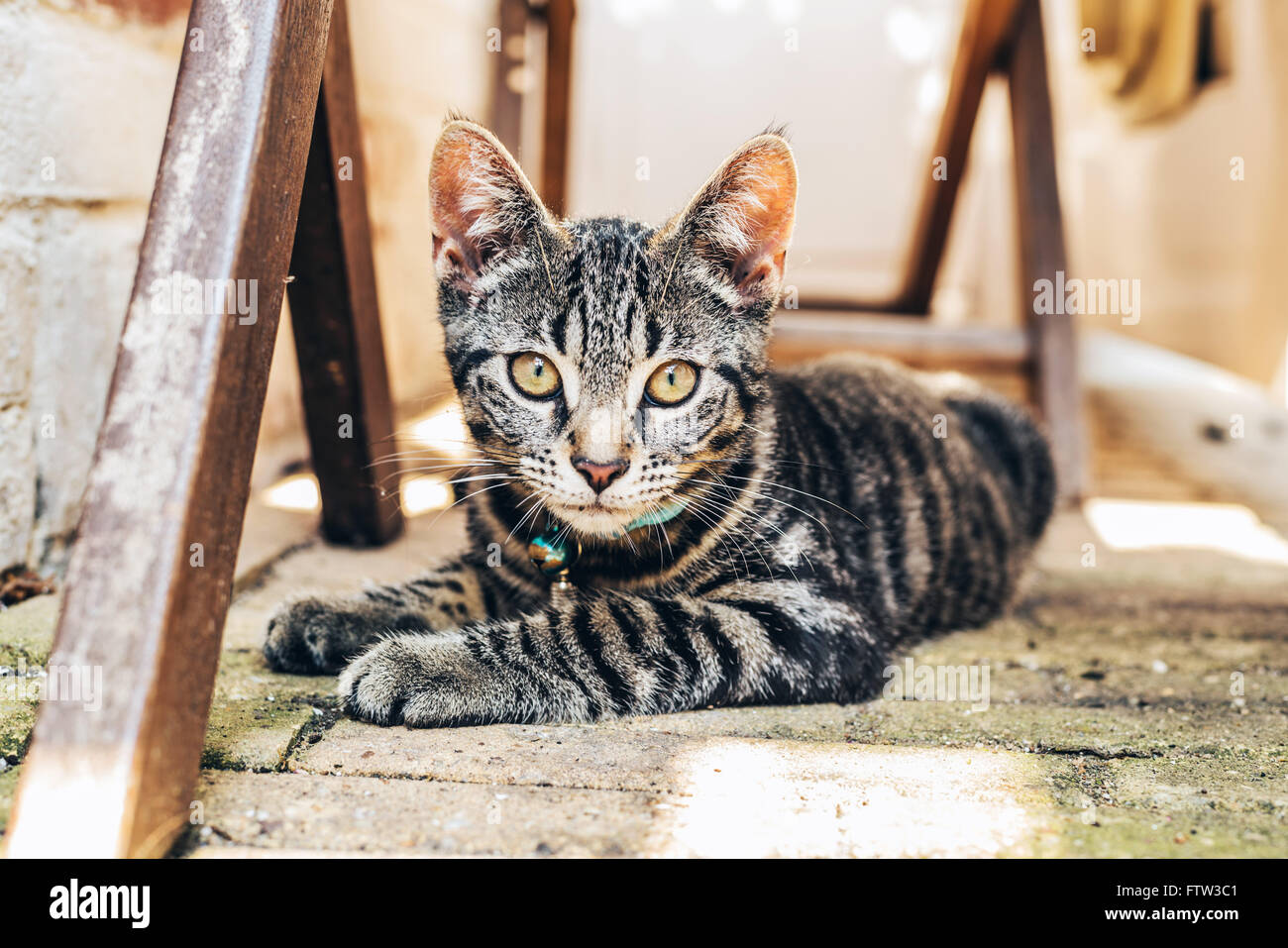 Coloration Oeil De Tigre Golden Amber Eyes Photos Golden Amber Eyes Images Alamy