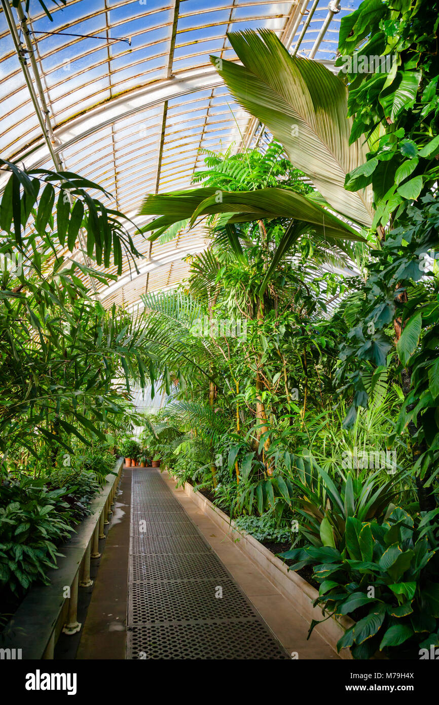 Plantes D\'intérieur Jardin Botanique | Images Gratuites La Nature ...