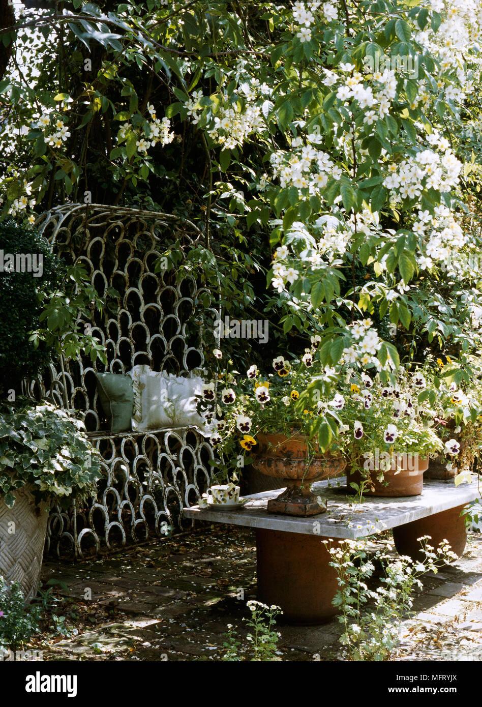 arbuste en pot ext rieur plantes en pot d int rieur tentez l originalit avec fleurodet. Black Bedroom Furniture Sets. Home Design Ideas