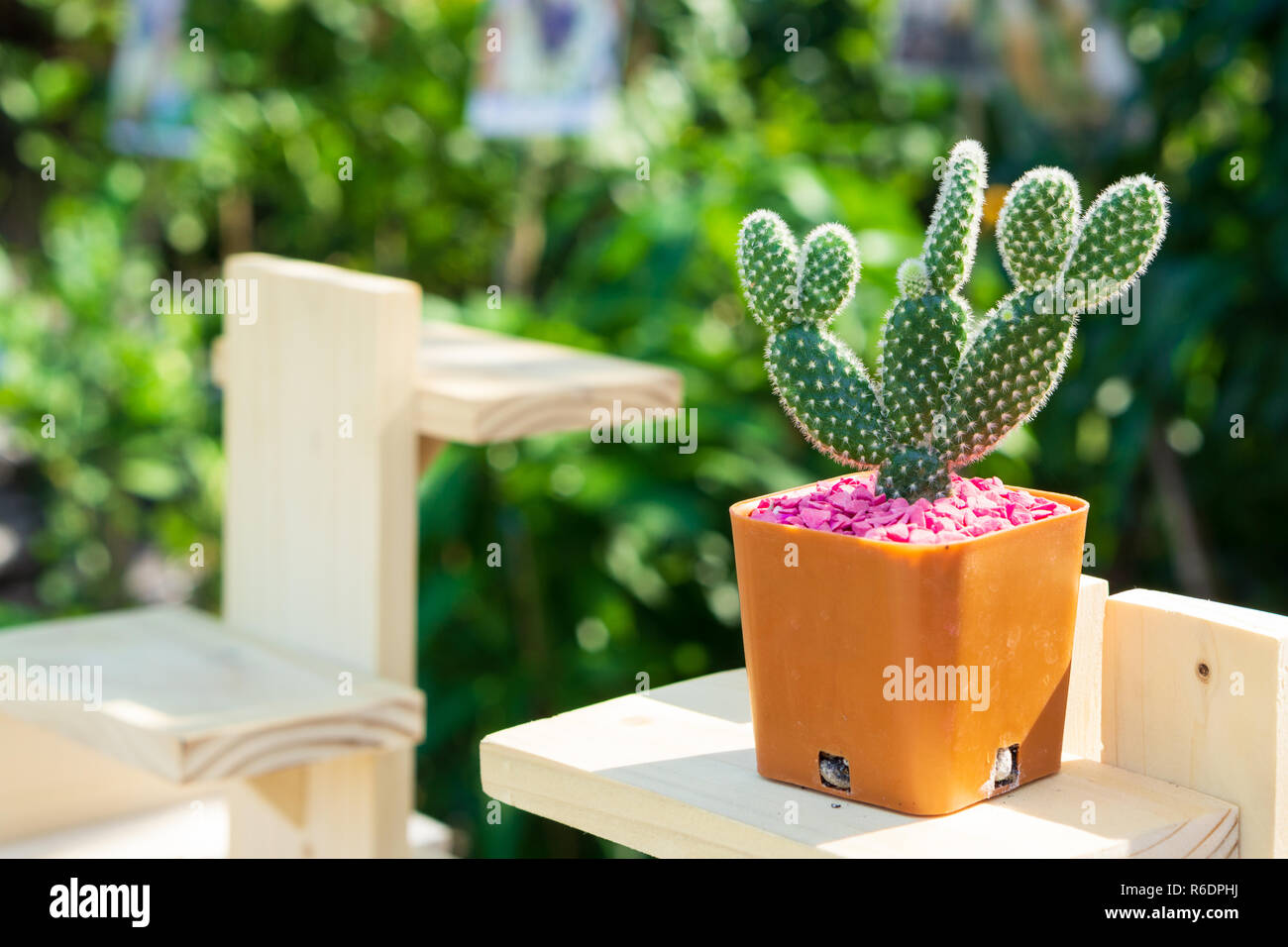 Mobilier Exterieur Fleuriste Tiny Flower Pot Photos Tiny Flower Pot Images Alamy
