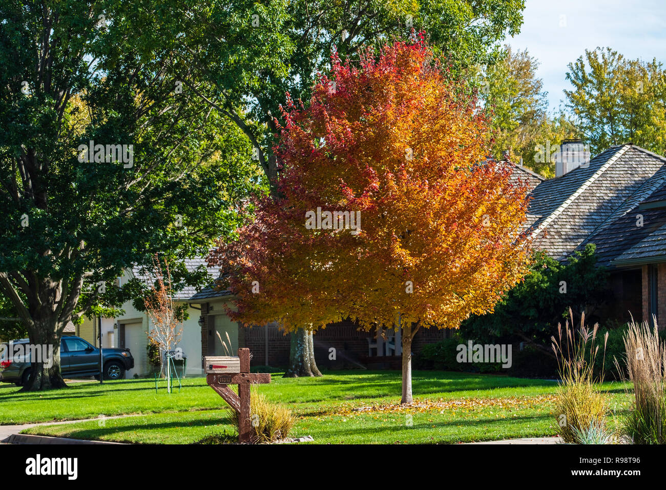Ahorn October Glory Rot Ahorn Photos Rot Ahorn Images Alamy
