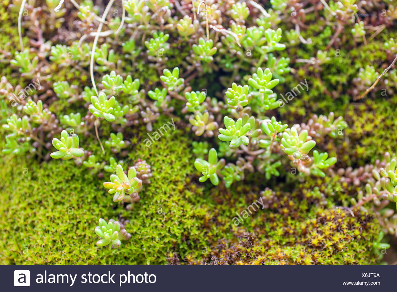 Plante Grasse Bord De Mer Succulents On Rocks Photos Succulents On Rocks Images Alamy