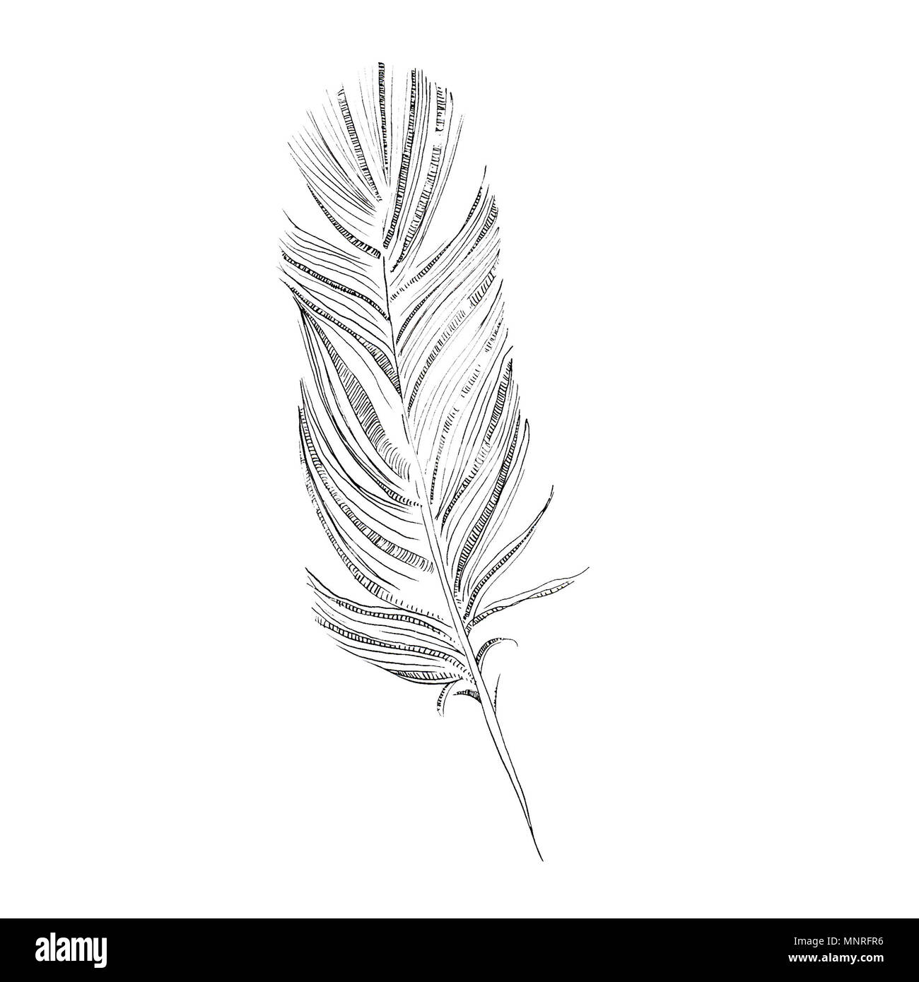 Disegno Piuma Feather Drawing Immagini And Feather Drawing Fotos Stock Alamy