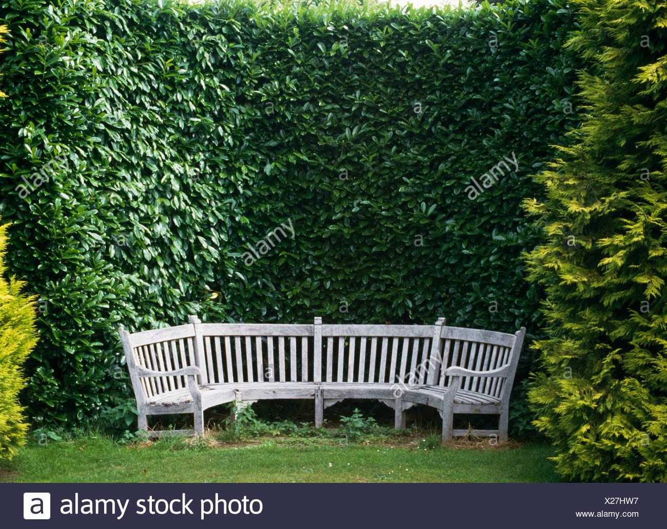 Piastrelle In Legno Florabest : Foto di siepi da giardino siepi ornamentali da giardino gli