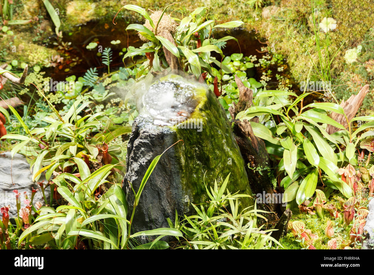 Carnivore Pflanzen Carnivorous Plants And Pond In A Greenhouse Stock Photo